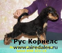 New photos of puppies from Mitya and Risha.